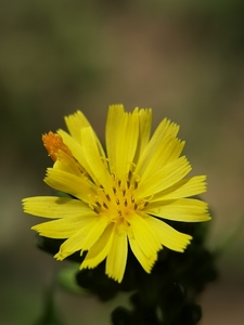 春天草地里的秘密,花粉随手拍-花粉俱乐部