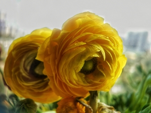 春意盎然,花粉随手拍-花粉俱乐部