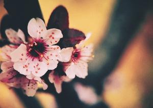 娇艳(花),花粉随手拍-花粉俱乐部