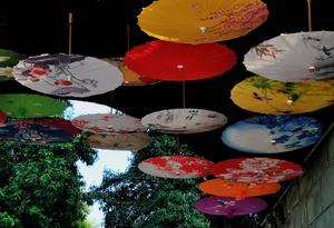 伞影,花粉随手拍-花粉俱乐部