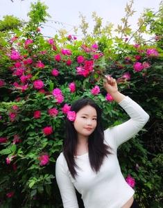 【华为Nova7pro】蔷薇花季,花粉随手拍-花粉俱乐部