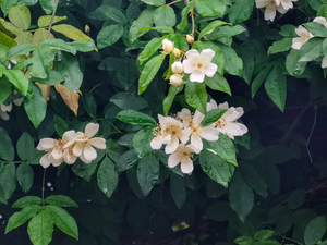 春末,花粉随手拍-花粉俱乐部