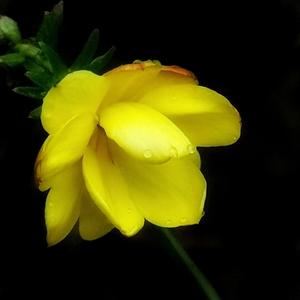雨润迎春,花粉随手拍-花粉俱乐部