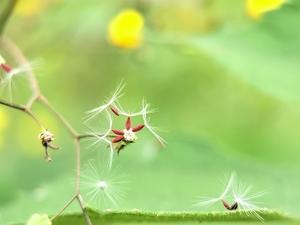 春天里,花粉随手拍-花粉俱乐部