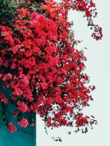 镜头里的红,花粉随手拍-花粉俱乐部