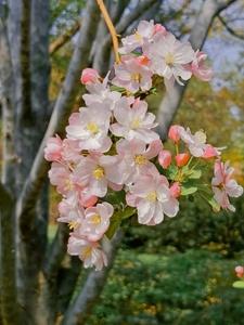 多彩的春天,花粉随手拍-花粉俱乐部