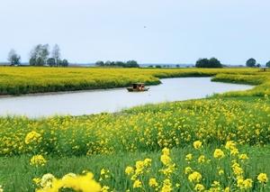 船在花海中,花粉随手拍-花粉俱乐部