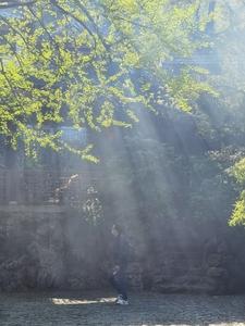 #用华为手机拍最美春光#——春天的绿,花粉随手拍-花粉俱乐部