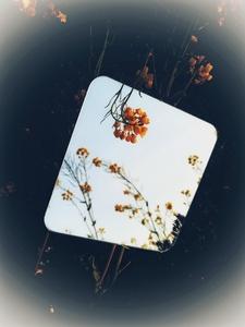 镜中景,花粉随手拍-花粉俱乐部
