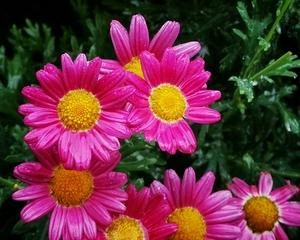 【雨中行摄】,花粉随手拍-花粉俱乐部