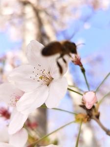 花花世界,花粉随手拍-花粉俱乐部