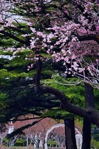 花开四月春满园,花粉随手拍-花粉俱乐部