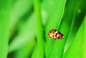 虫虫欲动,花粉随手拍-花粉俱乐部