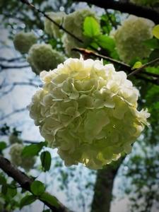 花团锦簇,花粉随手拍-花粉俱乐部
