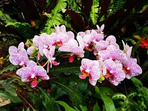 上海植物园花展(二),花粉随手拍-花粉俱乐部