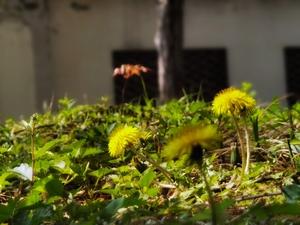 春的召唤,花粉随手拍-花粉俱乐部