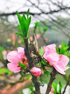 春天印象,花粉随手拍-花粉俱乐部