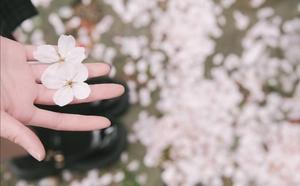【花粉女生】樱花树下,花粉随手拍-花粉俱乐部