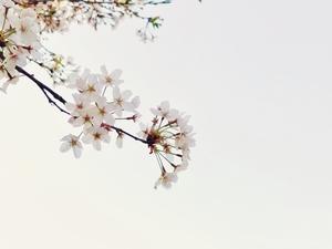 春来,花粉随手拍-花粉俱乐部