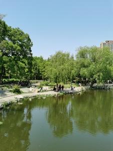 兖州少陵公园,花粉随手拍-花粉俱乐部