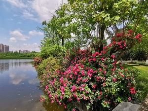 南湖湿地公园,花粉随手拍-花粉俱乐部
