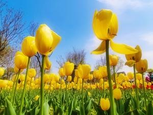 春天里的郁金香,花粉随手拍-花粉俱乐部