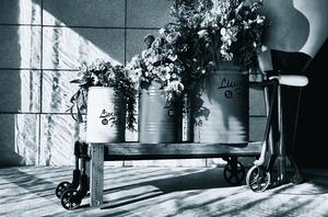 黑白静物光影,花粉随手拍-花粉俱乐部