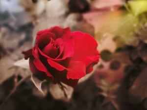 四 月 的 花,花粉摄影-花粉俱乐部