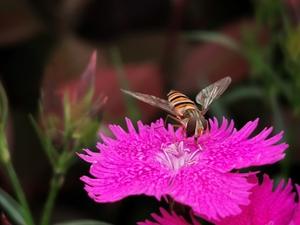 花开的声音,花粉随手拍-花粉俱乐部