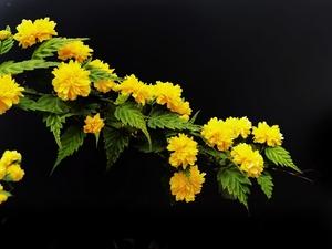 全屏模式拍摄地一组深色背景花卉,花粉随手拍-花粉俱乐部