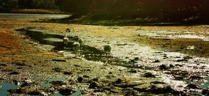 湿地鹭影,花粉随手拍-花粉俱乐部