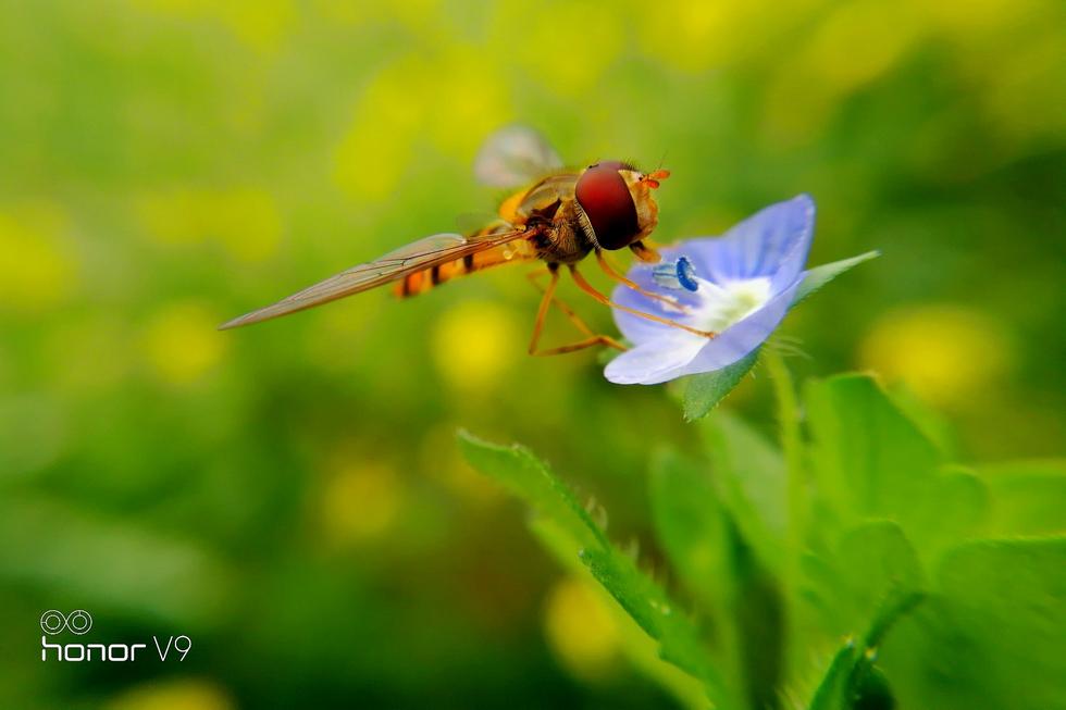 可爱精灵,花粉摄影-花粉俱乐部