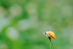 《微距》,花粉摄影-花粉俱乐部