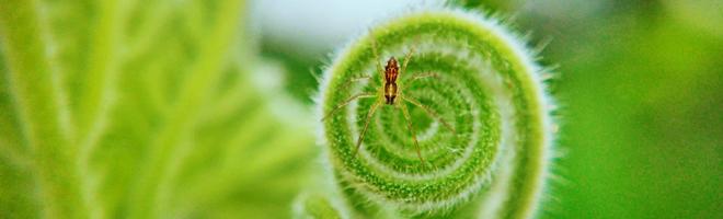 摄影 | 荣耀20 PRO镜头下的微观世界,摄影师这创意满分!,花粉随手拍-花粉俱乐部