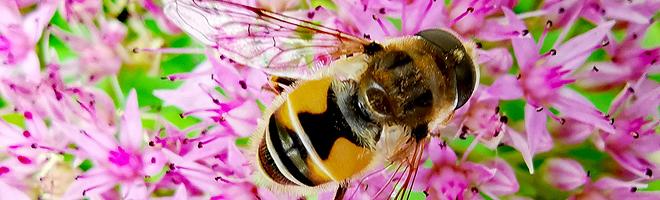 评测 | 华为Mate20超级微距样张:纤毫毕现,行走的显微镜!,华为Mate20系列-花粉俱乐部