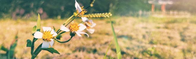 摄影 | 不是我说,荣耀20S镜头下这波水库美景我确定你没见过!,花粉随手拍-花粉俱乐部