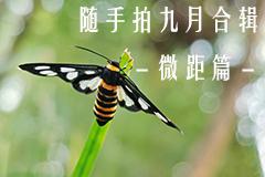 随手拍九月合集之微距篇,花粉摄影-花粉俱乐部