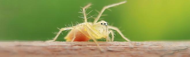 摄影 | 纤毫毕现,微距摄影带你揭秘触不可及的微观世界,神奇!,花粉随手拍-花粉俱乐部