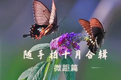 随手拍十月合辑之微距篇,花粉摄影-花粉俱乐部