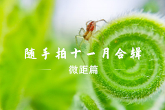随手拍十一月合辑之微距篇,花粉摄影-花粉俱乐部