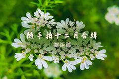 随手拍十二月合辑之微距篇,花粉摄影-花粉俱乐部