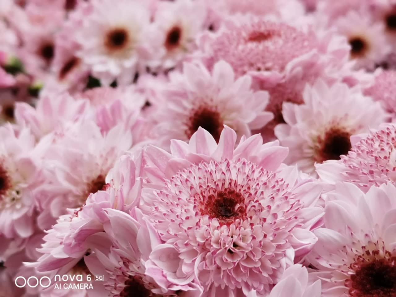 2020新年快乐:广州花市拍照合辑,华为nova6系列-花粉俱乐部