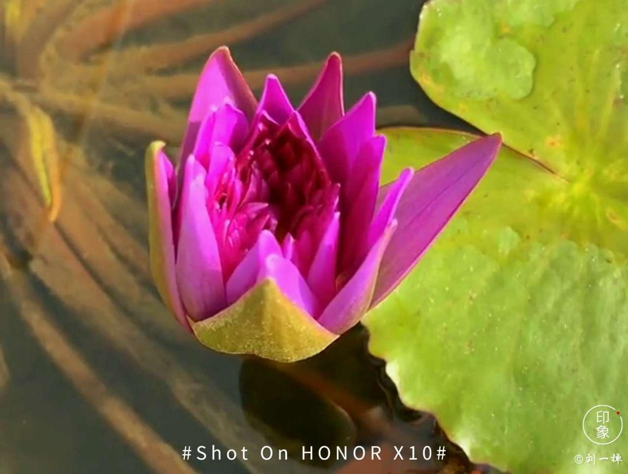 【延时摄影】花开的岁月,花粉随手拍-花粉俱乐部