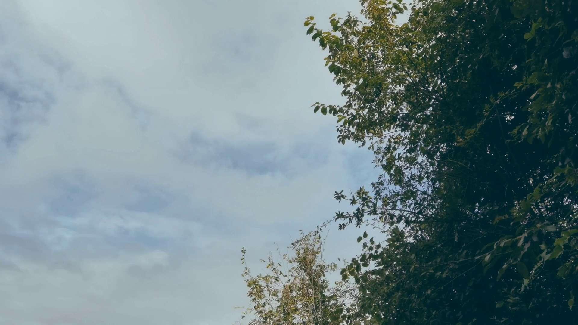 摄影 | 别怀疑!本视频纯手机手持拍摄,雨天这种拍摄手法,还没见过吧!,花粉随手拍-花粉俱乐部