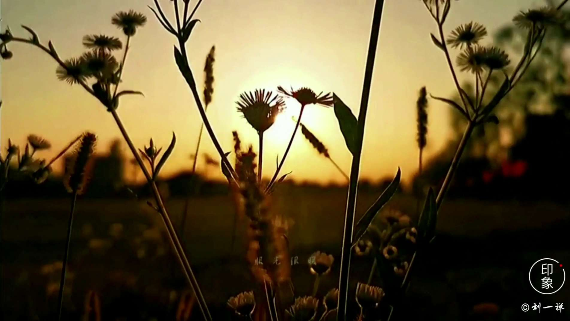 【金秋十月】美好如初,花粉随手拍-花粉俱乐部