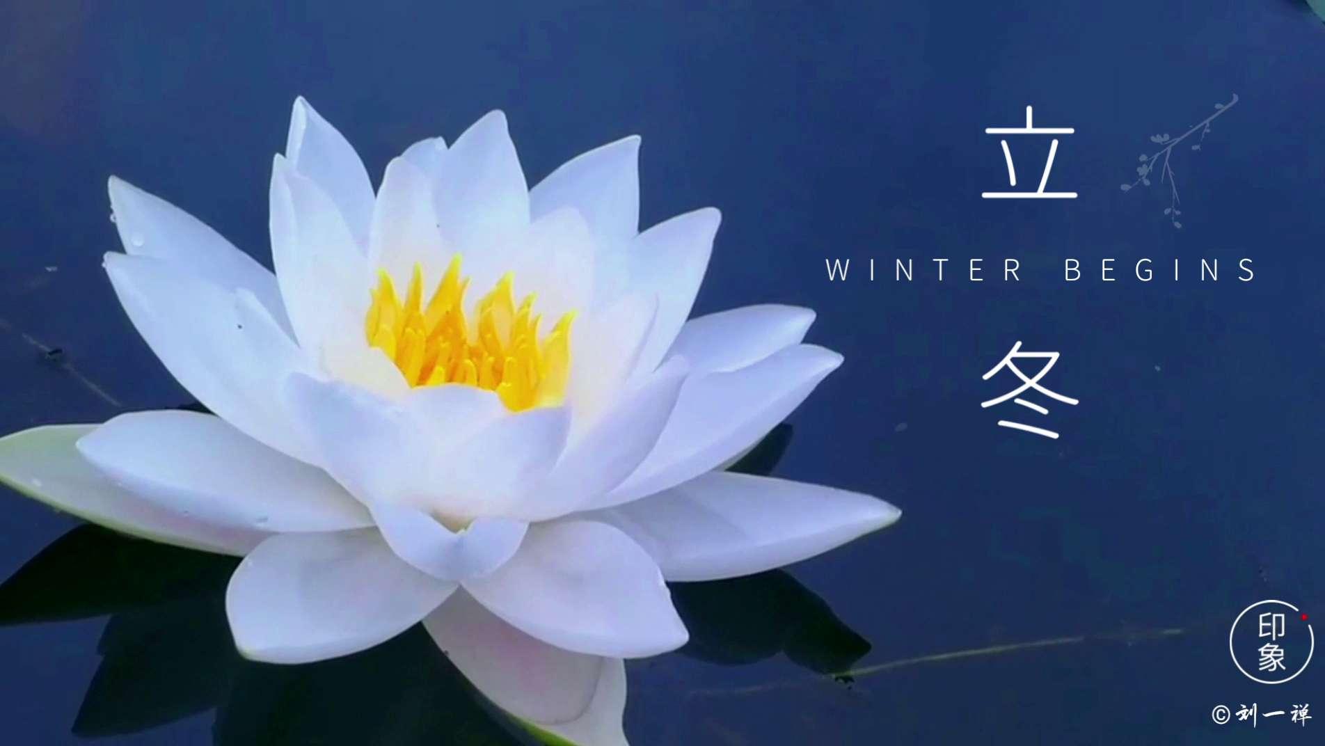 【二十四节气】今日立冬,花粉随手拍-花粉俱乐部