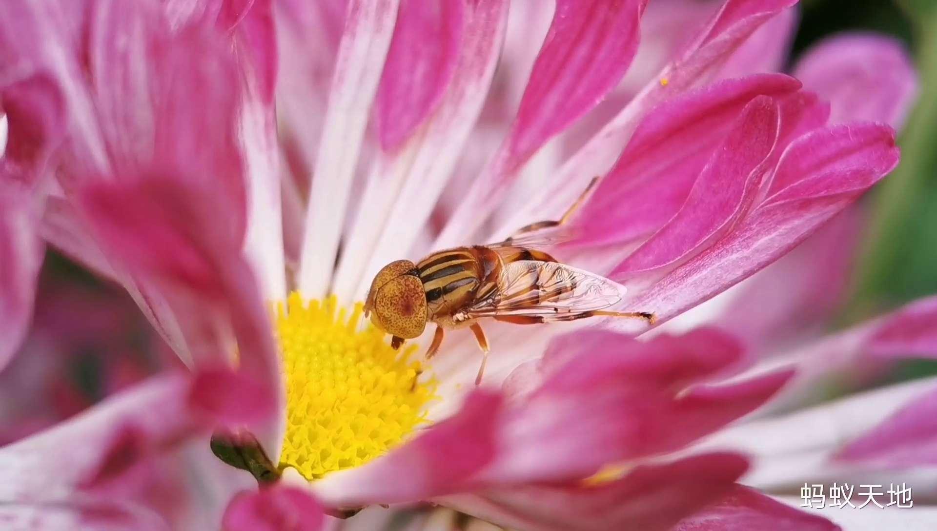花花世界里的小昆虫,花粉随手拍-花粉俱乐部