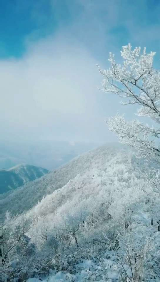 【华为p40pro+】冬日印象,随手拍-花粉俱乐部