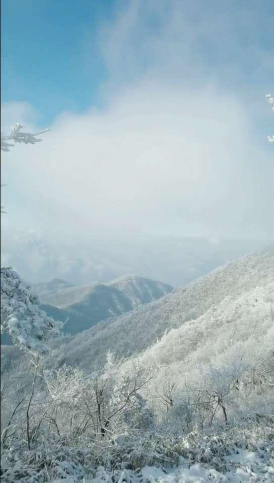 冬日印象~杏梅尖雾凇,花粉随手拍-花粉俱乐部