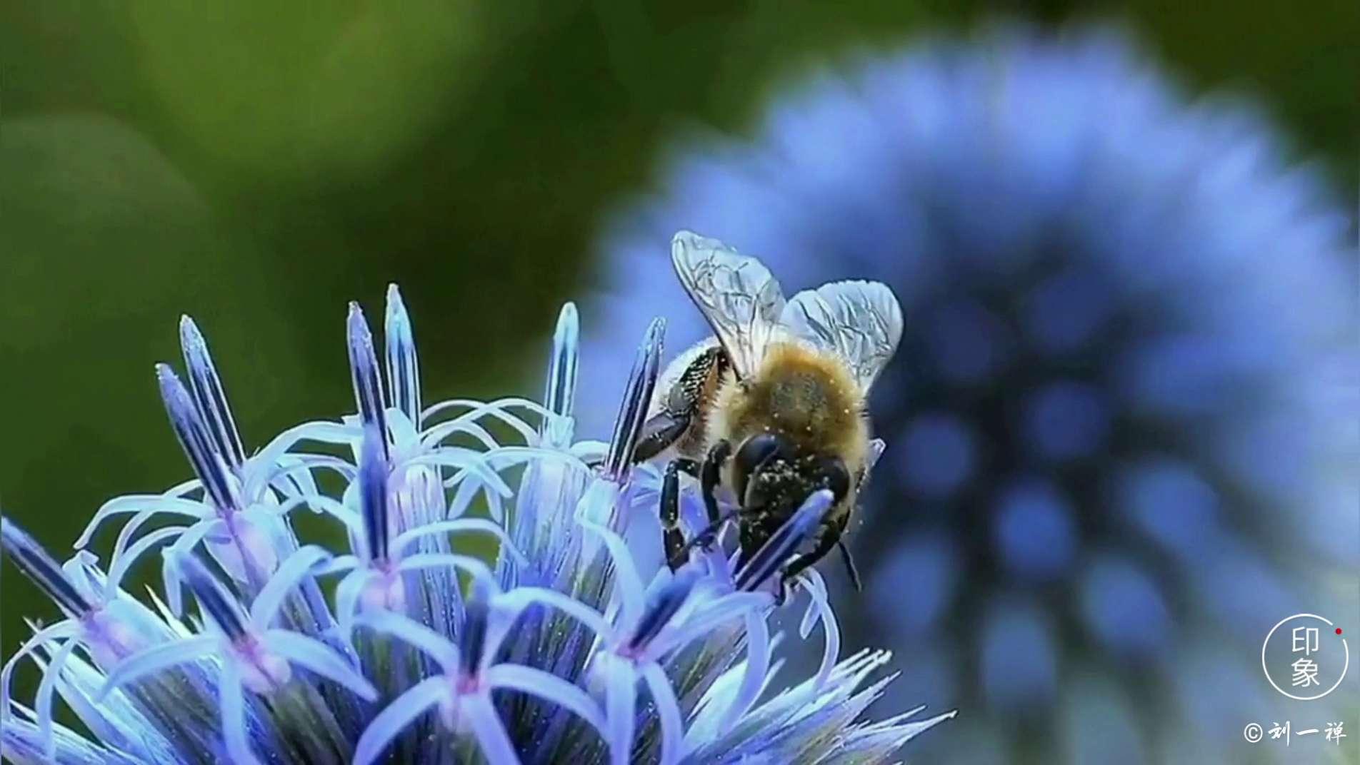【你若强大】美好自来,随手拍-花粉俱乐部
